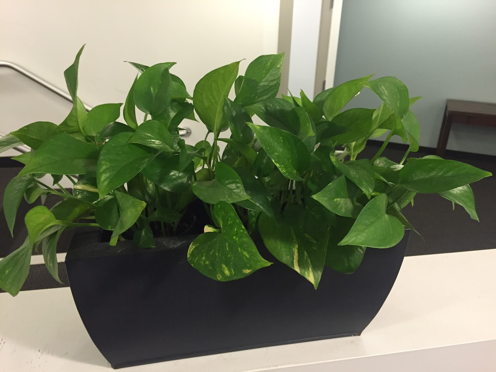 office planter. new angular planter box with pothos plants office e