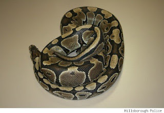 Abandoned Pet Snake