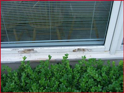 Pozzi window repair