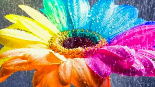 3d Flower Beutifull colorfull HD Image 1366 x 768