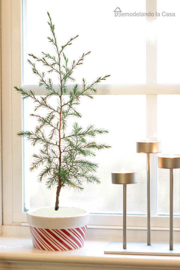 Little pine tree on kitchen's window sill in a red and white container - candelabra