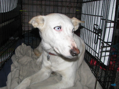 Diamond Dogs Rescue Billerica Ma