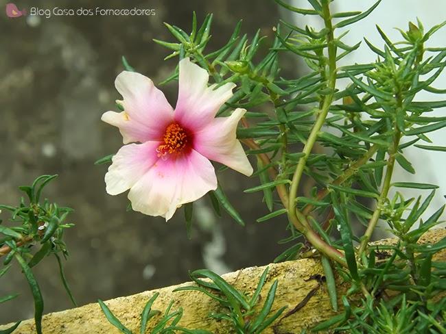 natureza, flores, projeto fotografico, o mundo de caliope, projeto fotografico 2014, projeto fotografico o mundo de caliope