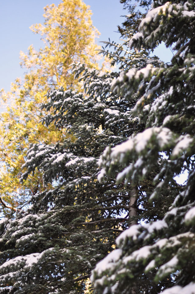nature, snow, trees, leaves