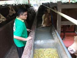 Kunjungan ke Peternakan Sapi Potong tgl 13 Maret 2013
