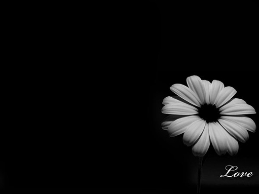 Black And White Wallpaper Of Love : Dreams...: I love you - Should I say it today?