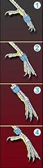 Como anilhar uma ave