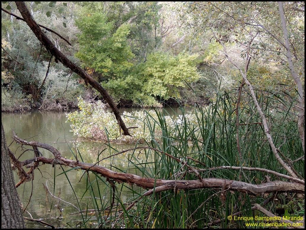 Ría de Ribadeo: Lagunas de Velilla de San Antonio (Madrid)