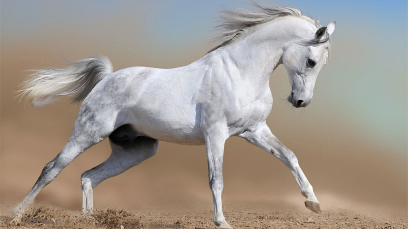 Must see   Wallpaper Horse Deviantart - horse+05  Image_312933.jpg