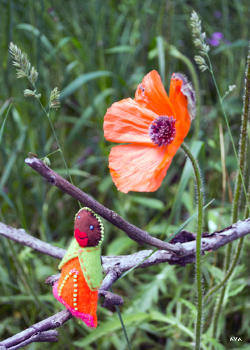 Little Mother and a bright orange poppy face off into the distance.