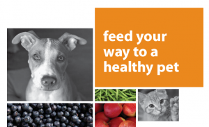 Feed Your Way to a Healthy Pet