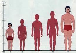 menambah tinggi badan secara efektif