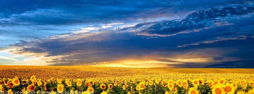 Couverture facebook en HD fleur de soleil