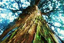 En los árboles...en los árboles...