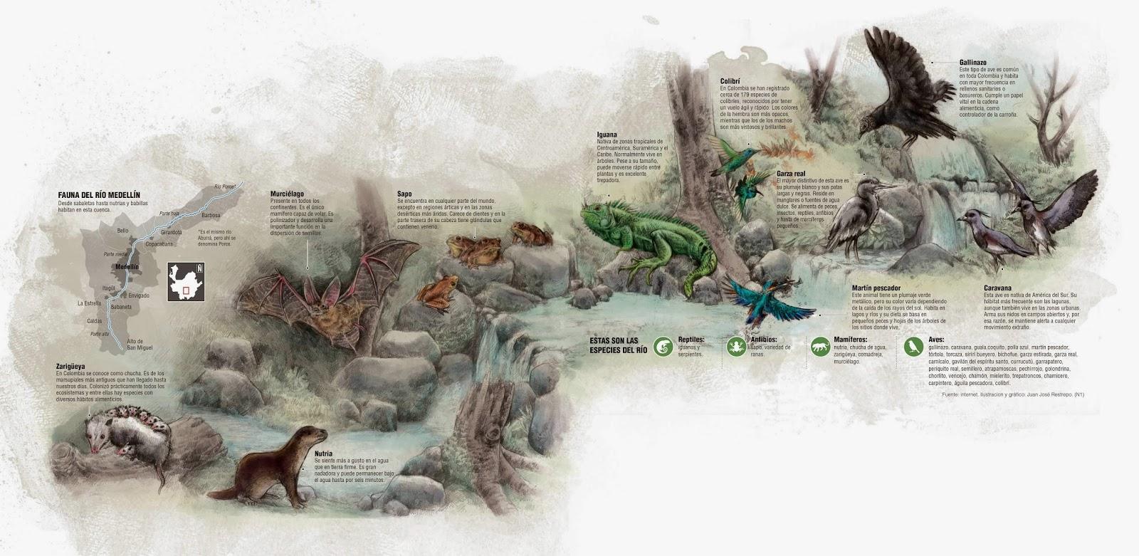 gaviones decorativos bali piedra natural gavion rojo En el río Medellín viven hasta iguanas y nutrias