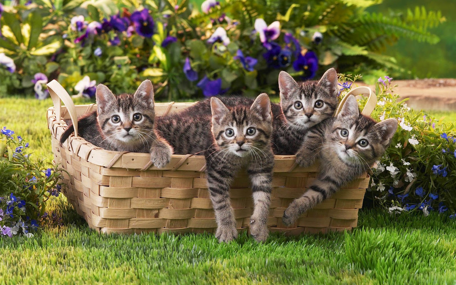 Funny Photo With Cute Little Cats In A Basket