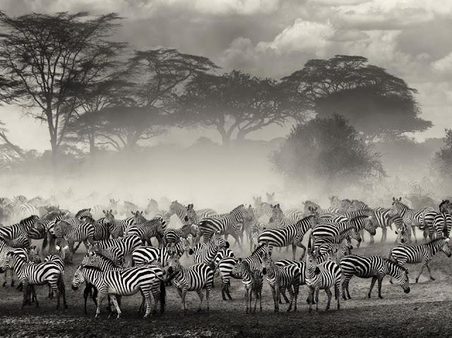 Serengeti Migration greatest wonder of nature