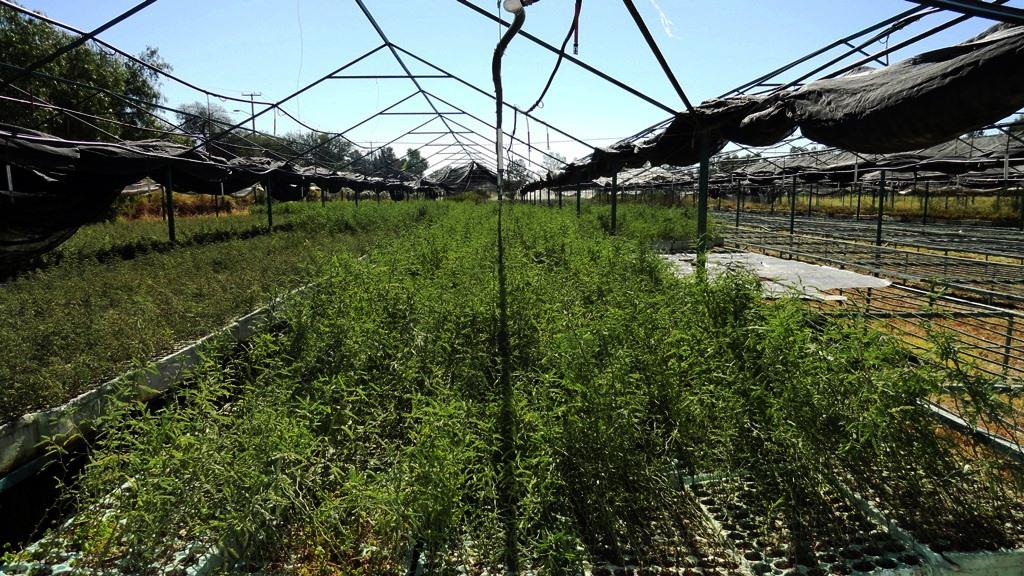 Dise o tradicional de un vivero forestal hora 25 forestal for Proyecto productivo de vivero forestal