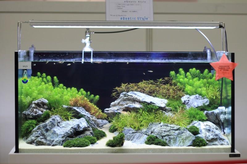 Aquatic Art: Aquarama 2013 Planted Tank Competition