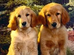 Kotoran Anjing Di Kota Ini Harga 7,9 Juta