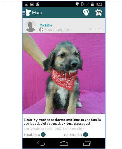 wof-aplicacion-movil-crear-reportes-perritos-abandonados