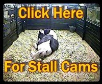 View Our Foaling Cams