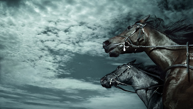 black horses_wallpaper_hd