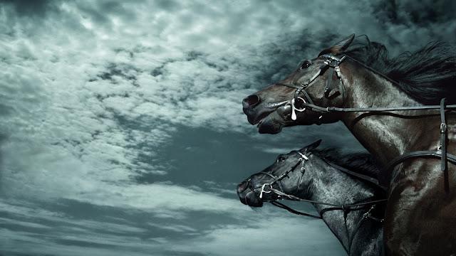 black horses_wallpaper_hd