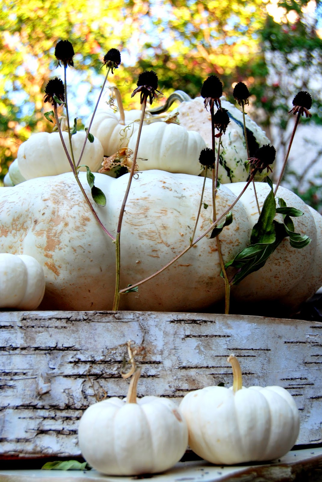 Ghostly White Pumpkins 3