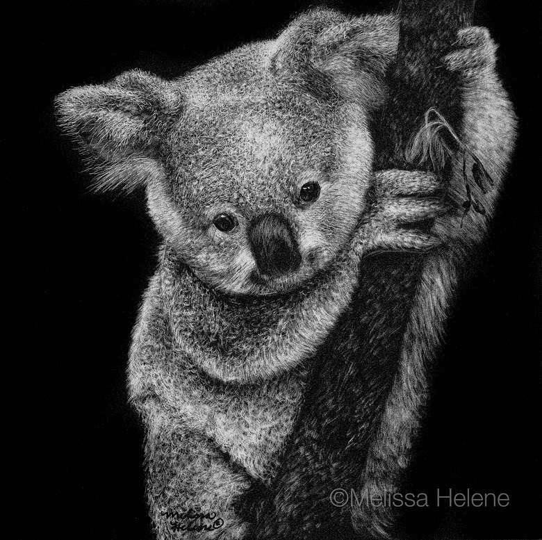 07-Koala-Melissa-Helene-Amazing-Expressions-in-Scratchboard-Animal-Portraits-www-designstack-co