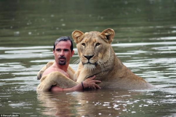 Conheça o amigo dos leões, leopardos e outros grandes felinos