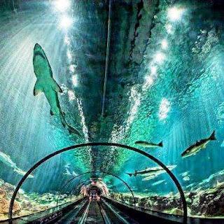 Sea World Orlando Florida (Best Honeymoon Destinations In USA) 4