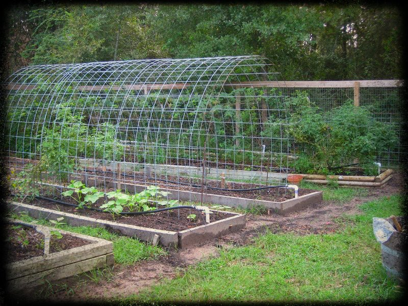 permaculture ideas space smart trellis arch between raised beds