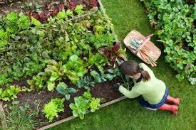 Como sembrar hortaliza