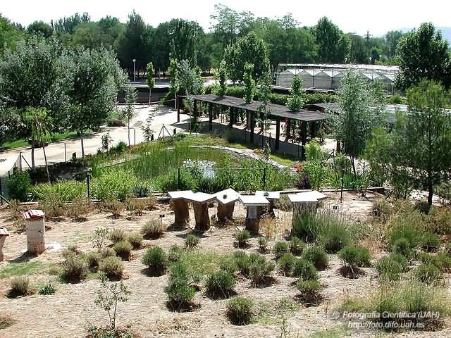 Actividades for Cementerio jardin de alcala de henares