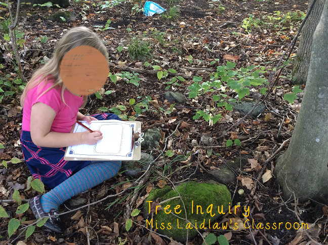 Tree Inquiry and Observation Kit for Primary Learners