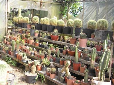 Vivero cactus mi ilusion galer a de im genes for Vivero de cactus