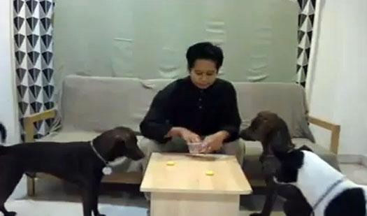 Video Penghinaan Hari Raya Aidilfitri, Berhari Raya Bersama Anjing
