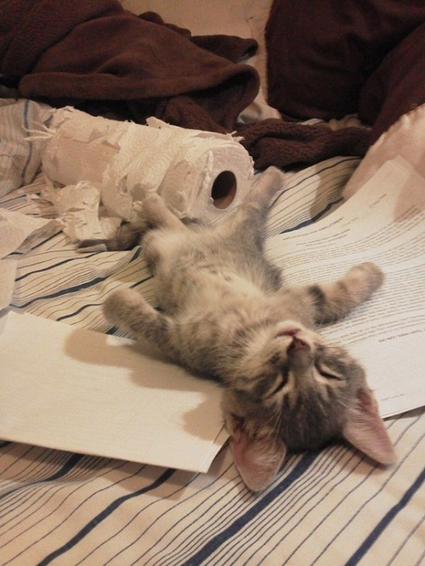passed out kitten, funny cats, cat photos, cat pictures