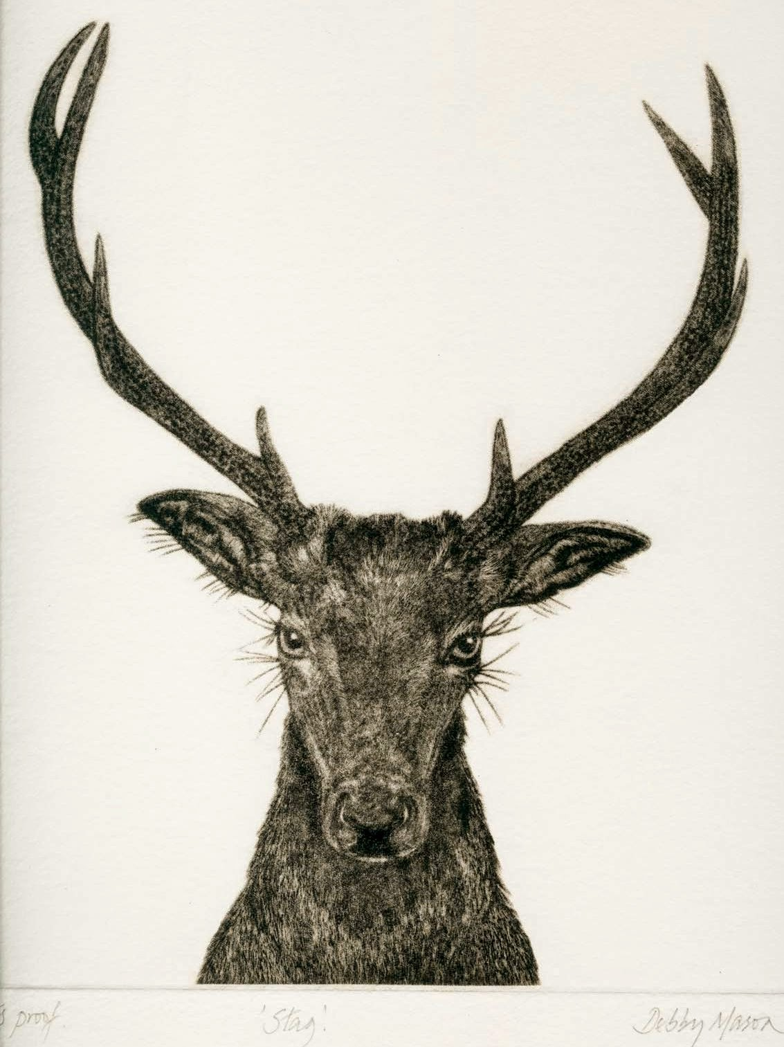 http://zoozon.blogspot.com/2014/12/stag-pictures-gallery-3.html