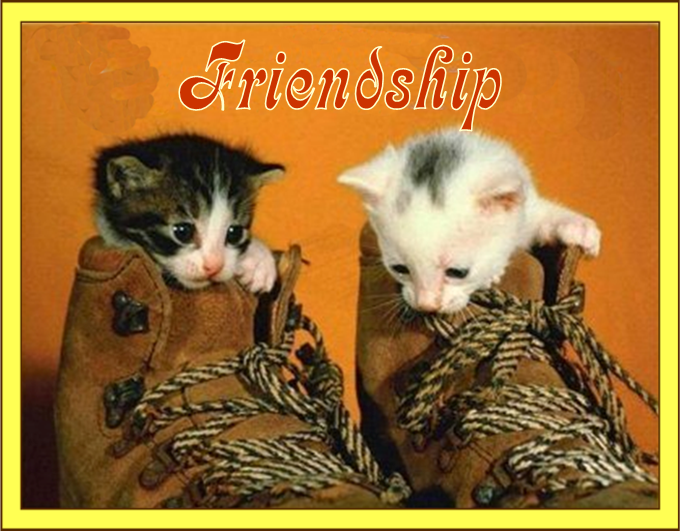 Few Thoughts on Friendship