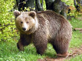 Τι λες τώρα! Αυτό για τις αρκούδες το ήξερες;