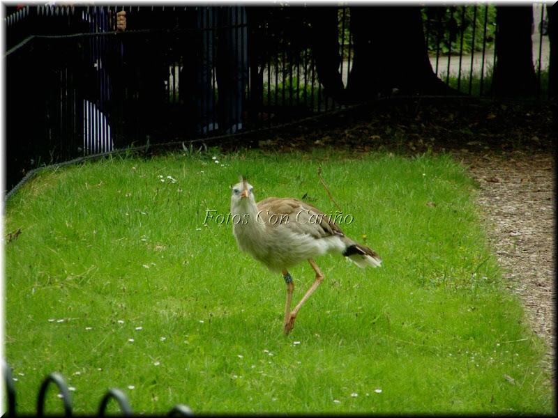 Ubicación: Zoológico de Londres, Regent's Park, Londres NW1 4RY  title=