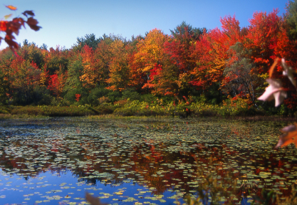 Autumn New England ~ Autumn Posters Picture