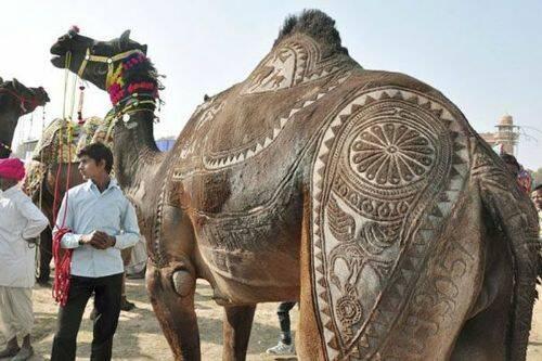 arte-camello-3.jpg