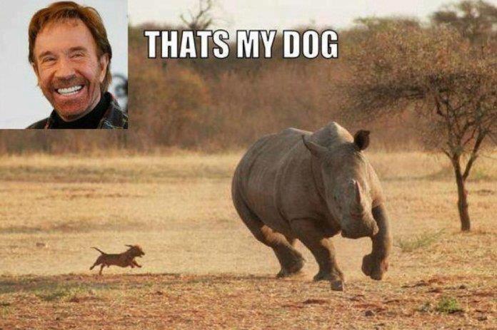 Thats Chuck Norris Dog