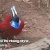 beautiful bird ......... how its chang style