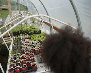 Reggie Watts Wealth Underground Farm