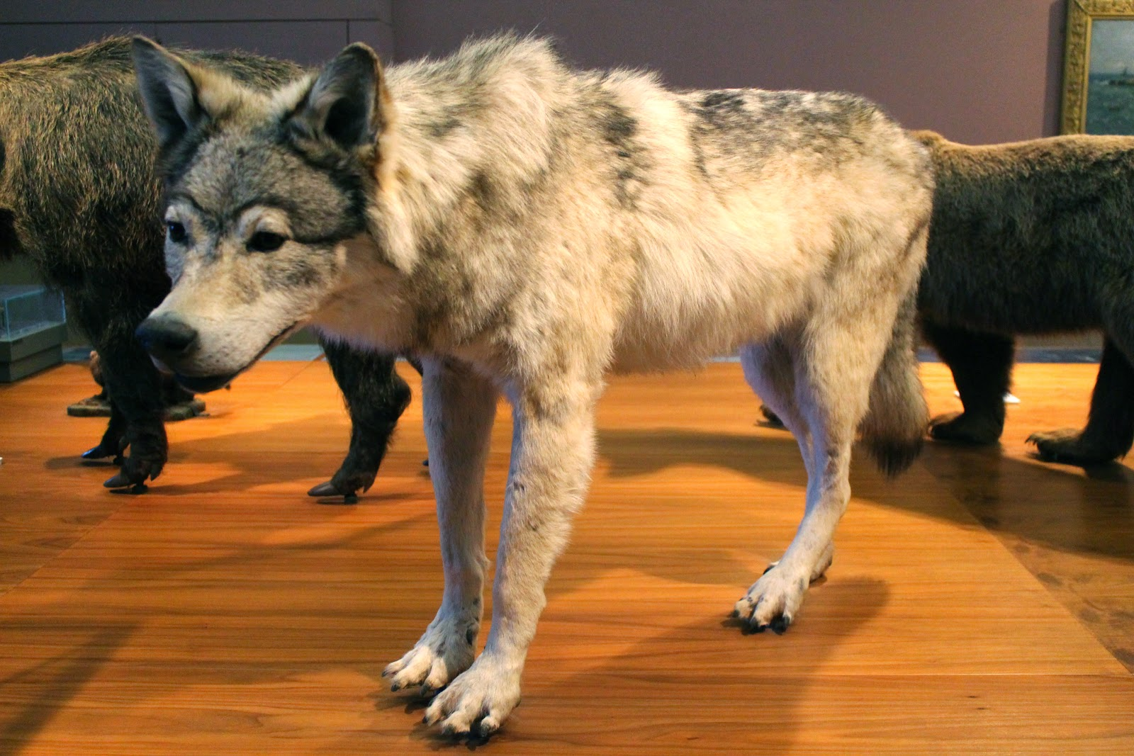 taxidermy wolf