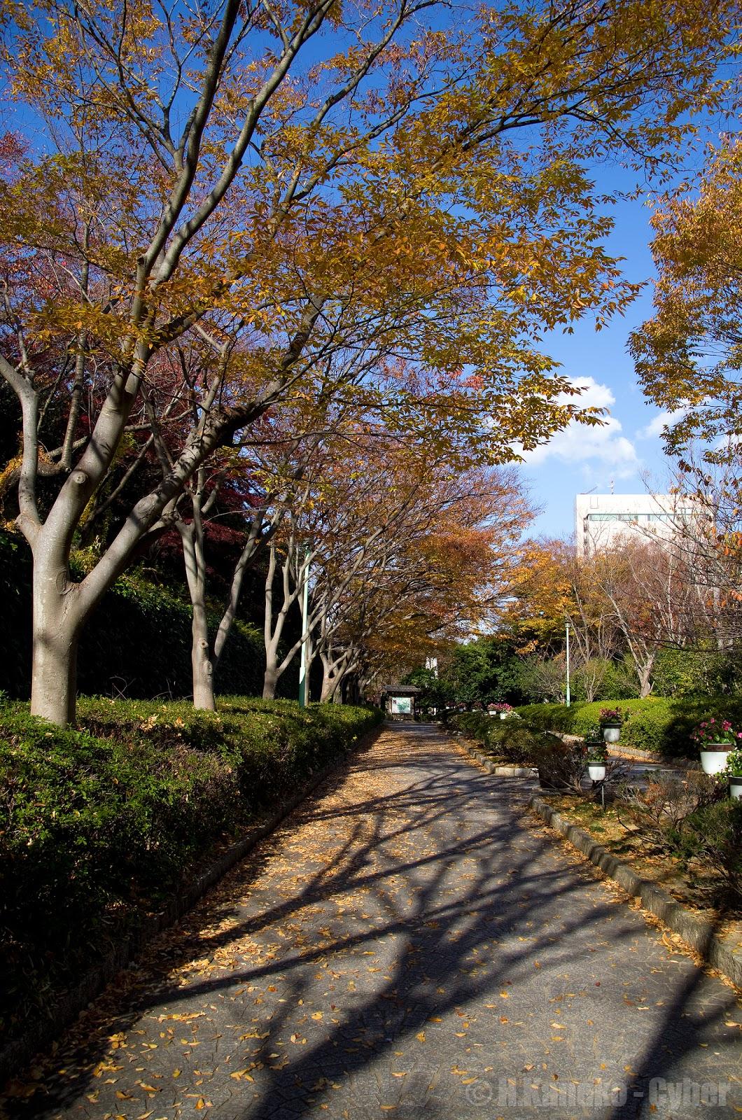 浜松城公園の錦秋 - 五